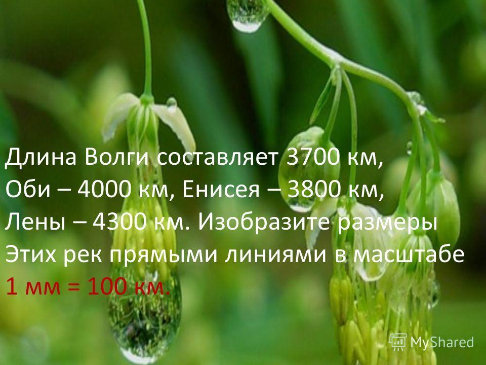 Длина Волги составляет 3700 км, Оби – 4000 км, Енисея – 3800 км, Лены – 4300 км. Изобразите размеры Этих рек прямыми линиями в масштабе 1 мм = 100 км.