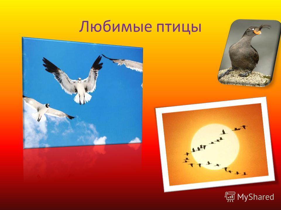 Любимые птицы