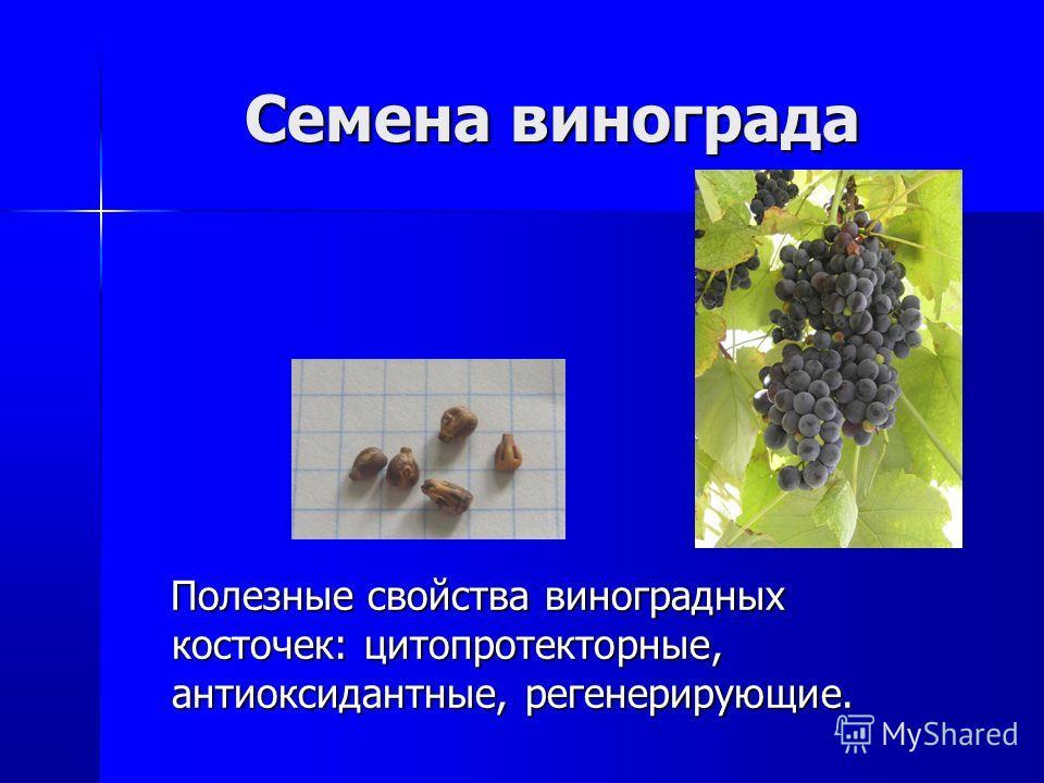 Семена винограда Полезные свойства виноградных косточек: цитопротекторные, антиоксидантные, регенерирующие. Полезные свойства виноградных косточек: цитопротекторные, антиоксидантные, регенерирующие.