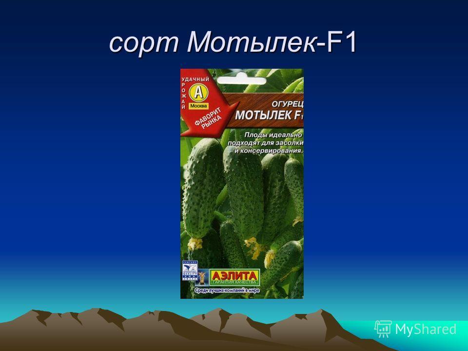 сорт Мотылек-F1