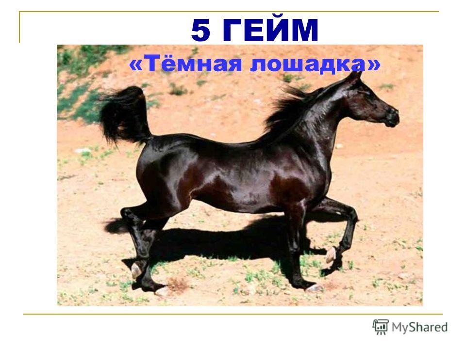 5 ГЕЙМ «Тёмная лошадка»