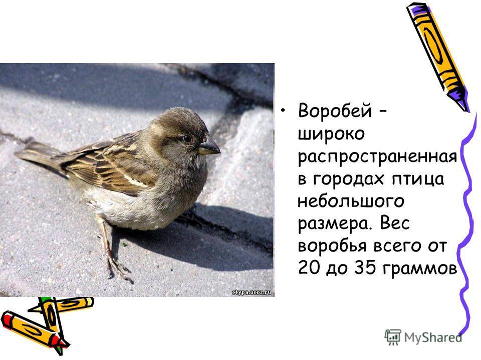 Воробей – широко распространенная в городах птица небольшого размера. Вес воробья всего от 20 до 35 граммов