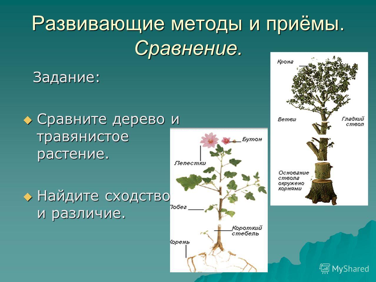 Развивающие методы и приёмы. Сравнение. Задание: Задание: Сравните дерево и травянистое растение. Сравните дерево и травянистое растение. Найдите сходство и различие. Найдите сходство и различие.