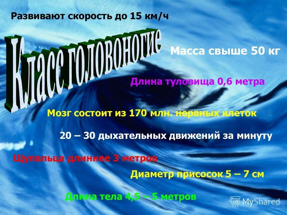 Масса свыше 50 кг Длина тела 4,5 – 5 метров Длина туловища 0,6 метра Щупальца длиннее 3 метров Диаметр присосок 5 – 7 см Развивают скорость до 15 км/ч Мозг состоит из 170 млн. нервных клеток 20 – 30 дыхательных движений за минуту