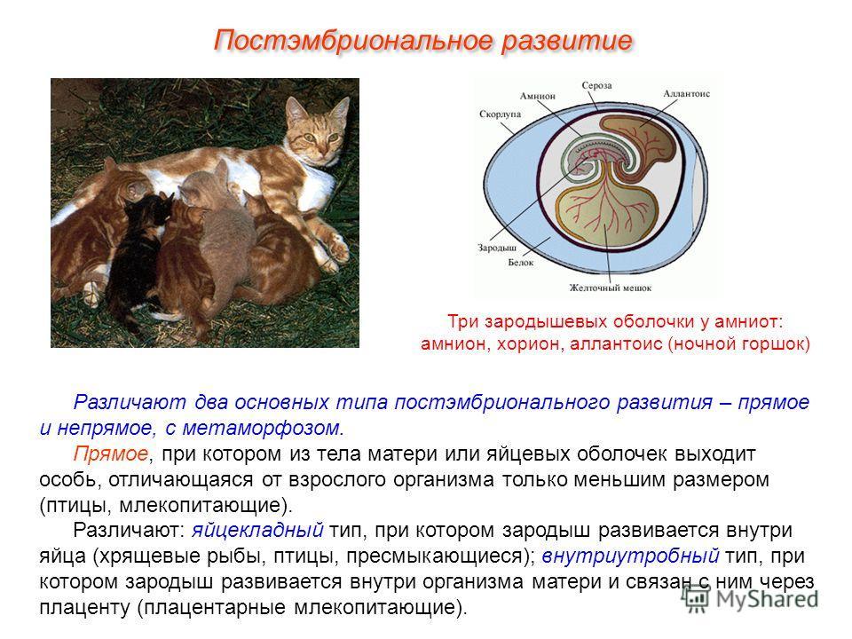 Постэмбриональное развитие Различают два основных типа постэмбрионального развития – прямое и непрямое, с метаморфозом. Прямое, при котором из тела матери или яйцевых оболочек выходит особь, отличающаяся от взрослого организма только меньшим размером