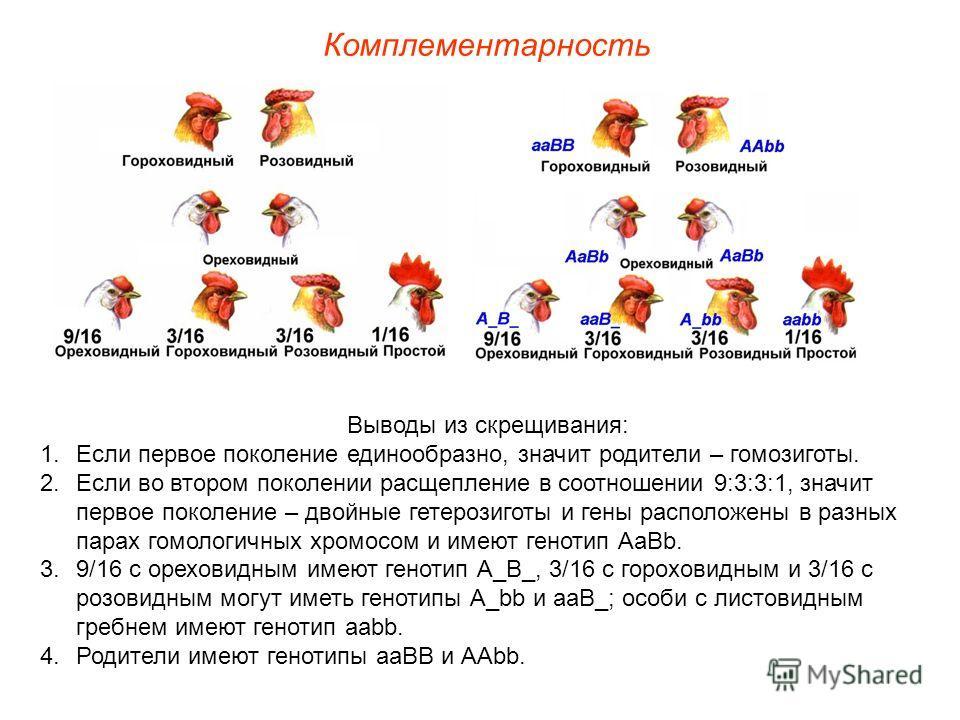 Комплементарность Выводы из скрещивания: 1.Если первое поколение единообразно, значит родители – гомозиготы. 2.Если во втором поколении расщепление в соотношении 9:3:3:1, значит первое поколение – двойные гетерозиготы и гены расположены в разных пара
