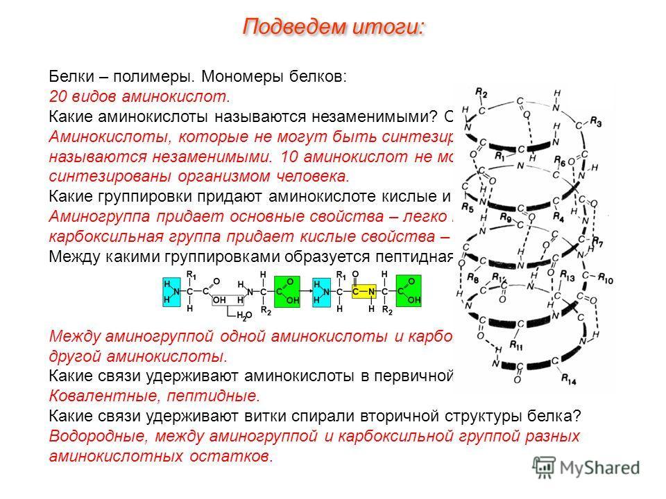 Белки – полимеры. Мономеры белков: 20 видов аминокислот. Какие аминокислоты называются незаменимыми? Сколько их? Аминокислоты, которые не могут быть синтезированы в организме называются незаменимыми. 10 аминокислот не могут быть синтезированы организ