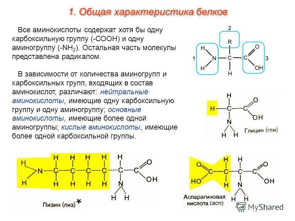 Все аминокислоты содержат хотя бы одну карбоксильную группу (-СООН) и одну аминогруппу (-NH 2 ). Остальная часть молекулы представлена радикалом. В зависимости от количества аминогрупп и карбоксильных групп, входящих в состав аминокислот, различают: