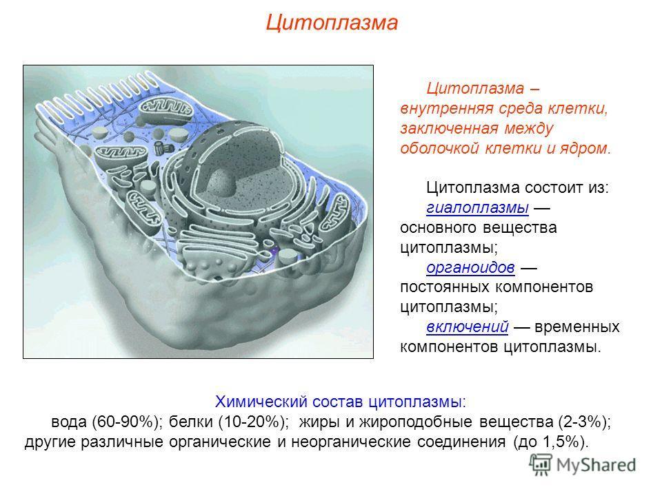 Цитоплазма Химический состав цитоплазмы: вода (60-90%); белки (10-20%); жиры и жироподобные вещества (2-3%); другие различные органические и неорганические соединения (до 1,5%). Цитоплазма – внутренняя среда клетки, заключенная между оболочкой клетки