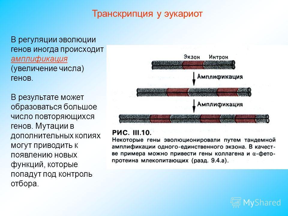 В регуляции эволюции генов иногда происходит амплификация (увеличение числа) генов. В результате может образоваться большое число повторяющихся генов. Мутации в дополнительных копиях могут приводить к появлению новых функций, которые попадут под конт