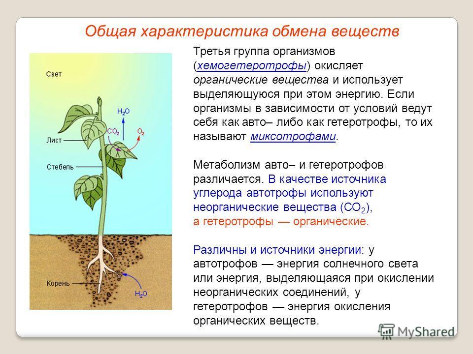 Третья группа организмов (хемогетеротрофы) окисляет органические вещества и использует выделяющуюся при этом энергию. Если организмы в зависимости от условий ведут себя как авто– либо как гетеротрофы, то их называют миксотрофами. Метаболизм авто– и г