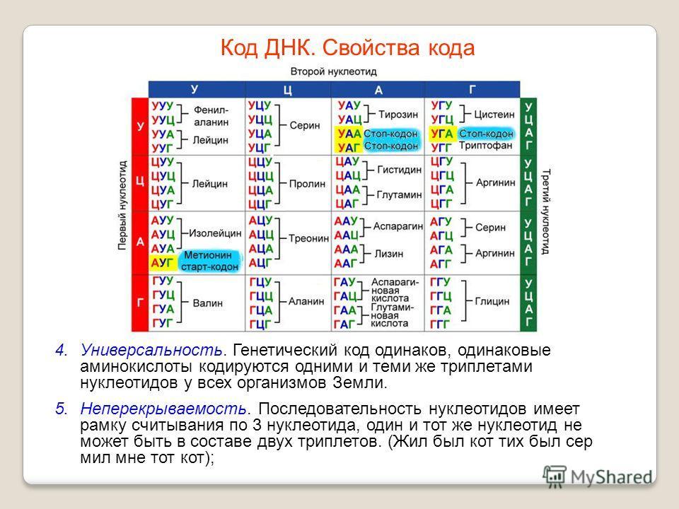 4.Универсальность. Генетический код одинаков, одинаковые аминокислоты кодируются одними и теми же триплетами нуклеотидов у всех организмов Земли. 5.Неперекрываемость. Последовательность нуклеотидов имеет рамку считывания по 3 нуклеотида, один и тот ж