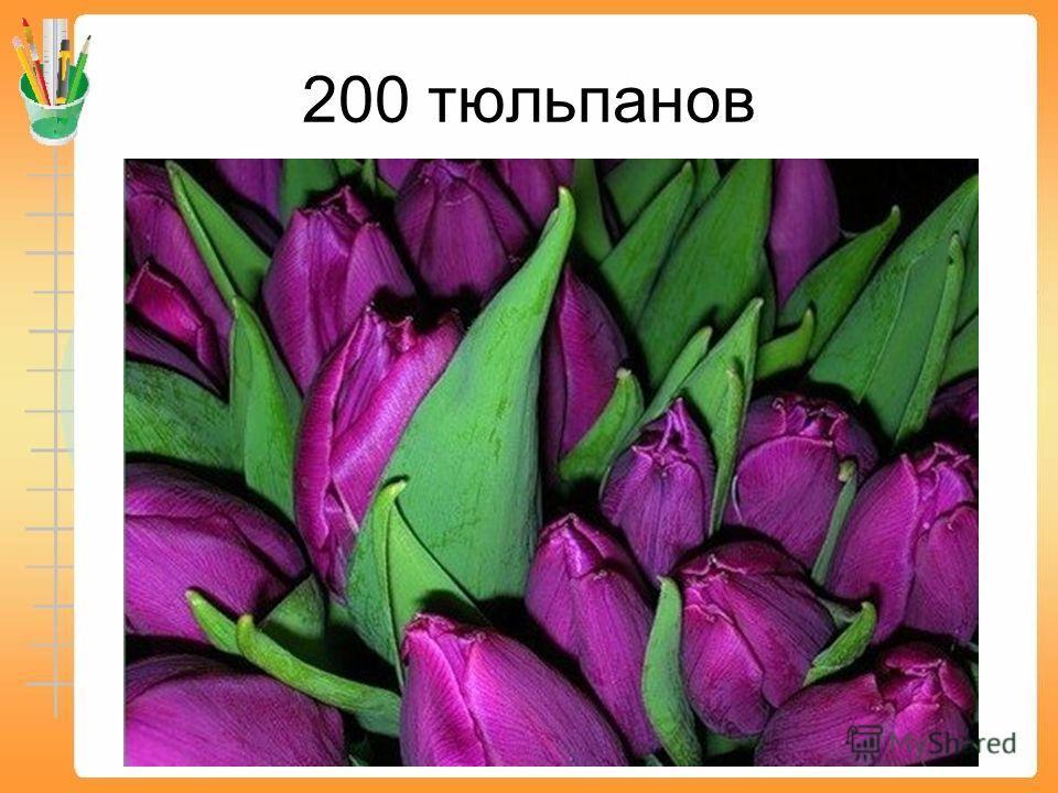 160 тюльпанов