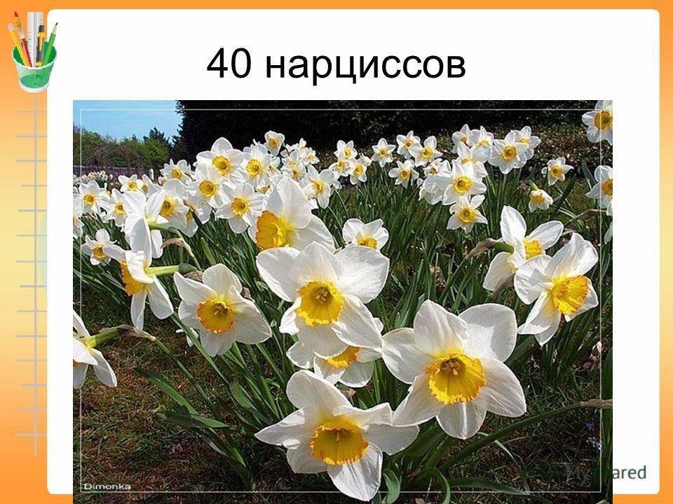 200 тюльпанов