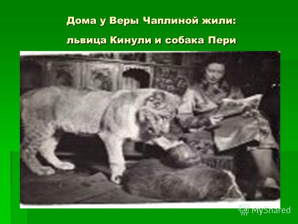 Дома у Веры Чаплиной жили: львица Кинули и собака Пери