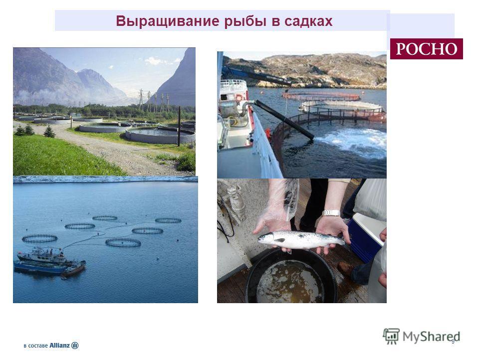 9 Выращивание рыбы в садках