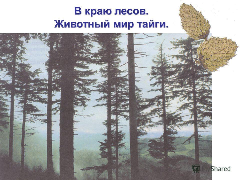 В краю лесов. Животный мир тайги.