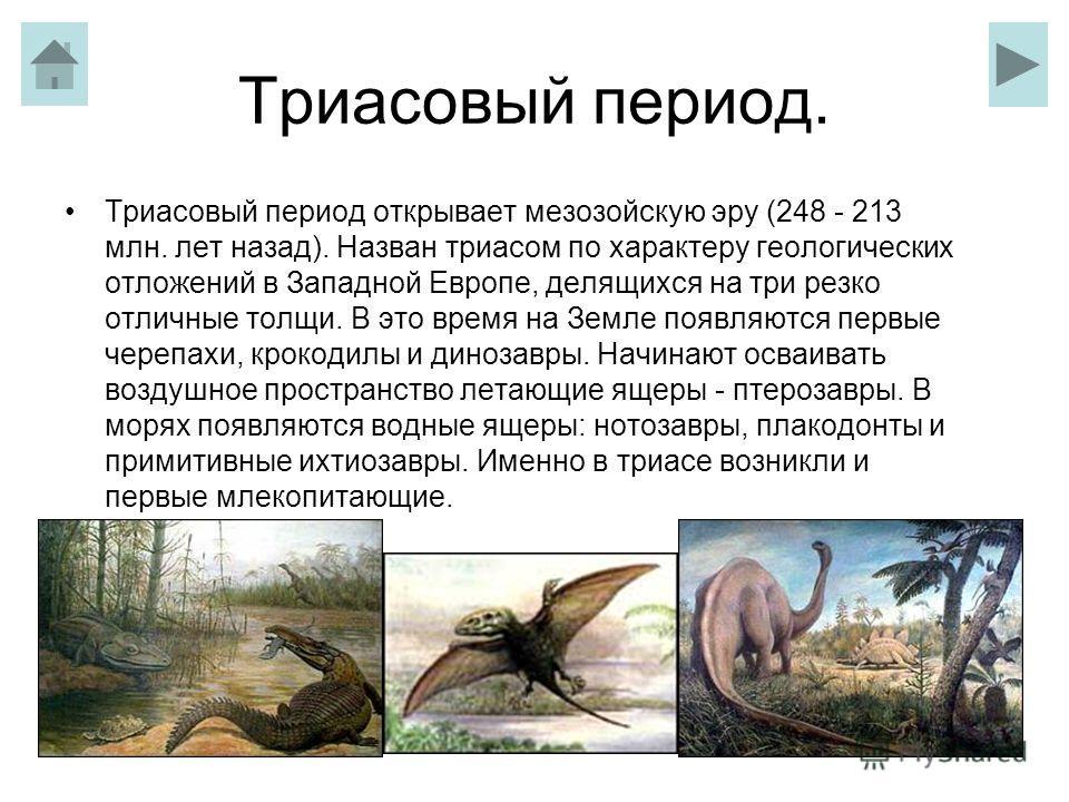 Триасовый период. Триасовый период открывает мезозойскую эру (248 - 213 млн. лет назад). Назван триасом по характеру геологических отложений в Западной Европе, делящихся на три резко отличные толщи. В это время на Земле появляются первые черепахи, кр