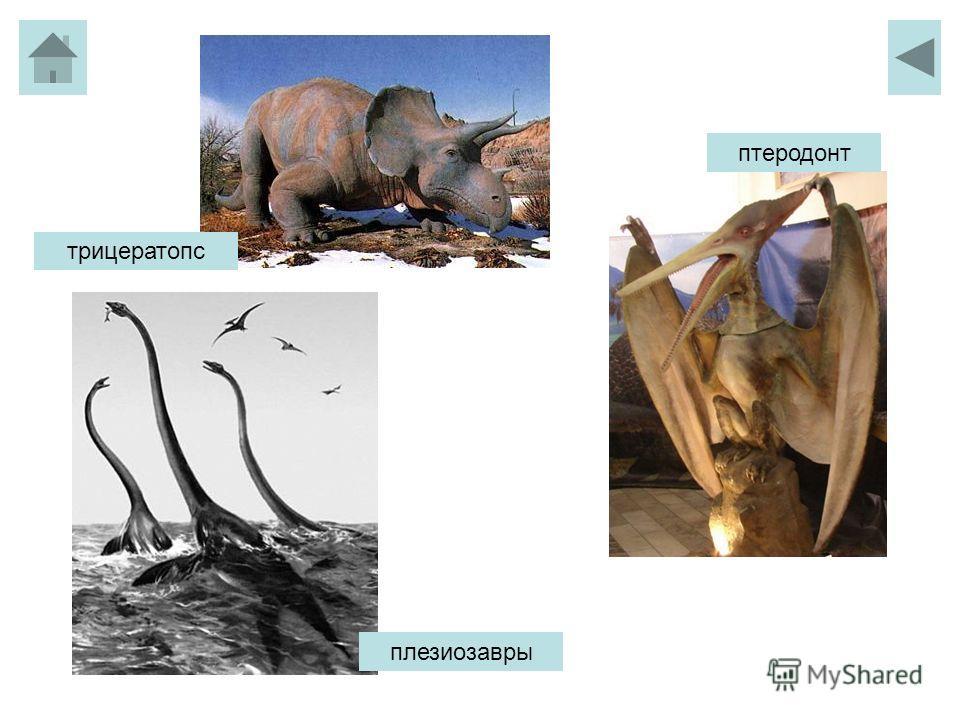 трицератопс птеродонт плезиозавры