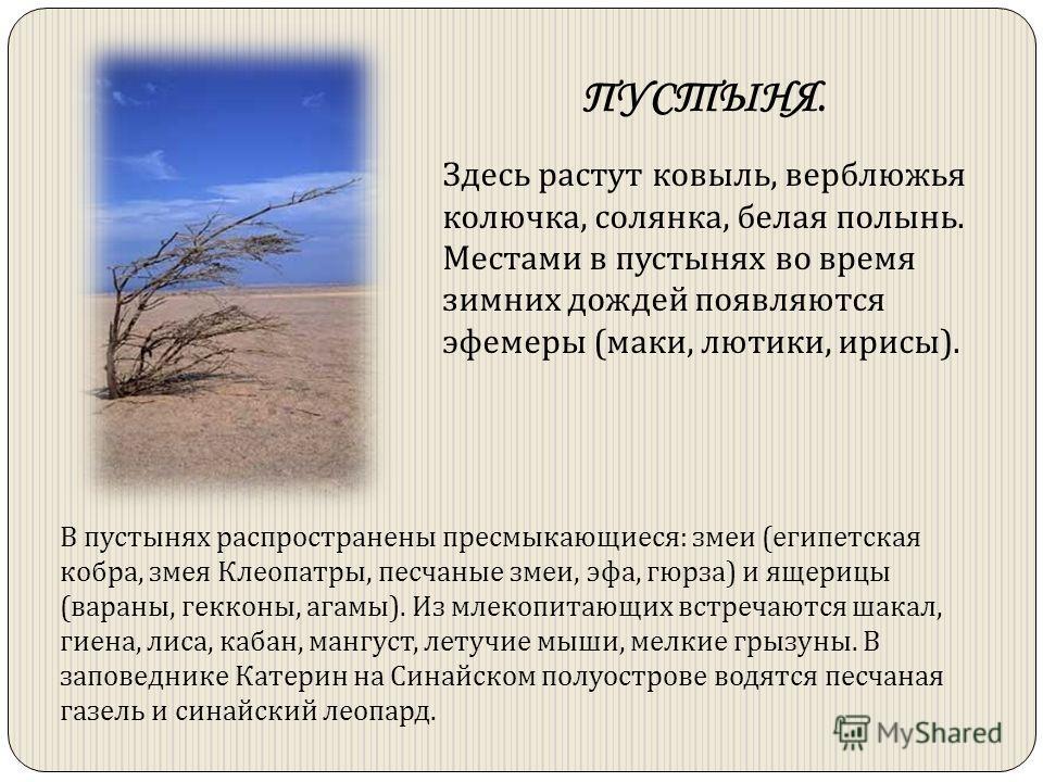 Здесь растут ковыль, верблюжья колючка, солянка, белая полынь. Местами в пустынях во время зимних дождей появляются эфемеры (маки, лютики, ирисы). ПУСТЫНЯ. В пустынях распространены пресмыкающиеся: змеи (египетская кобра, змея Клеопатры, песчаные зме