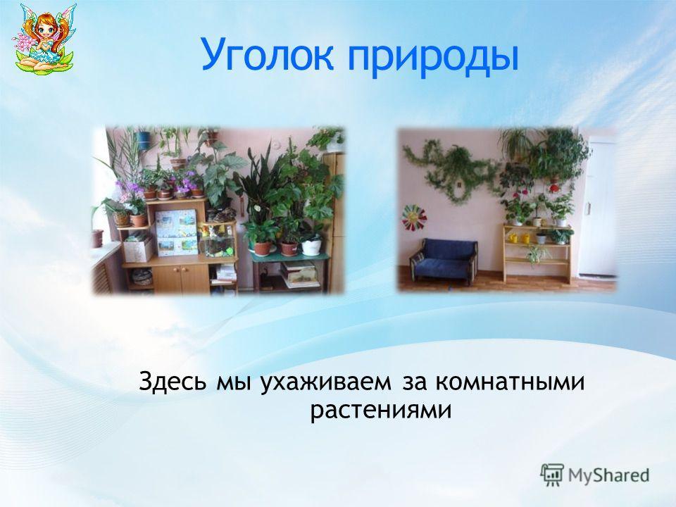 Уголок природы Здесь мы ухаживаем за комнатными растениями