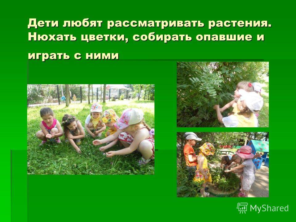 Дети любят рассматривать растения. Нюхать цветки, собирать опавшие и играть с ними