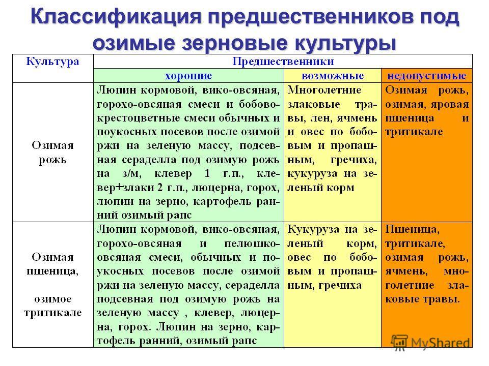 Классификация предшественников под озимые зерновые культуры