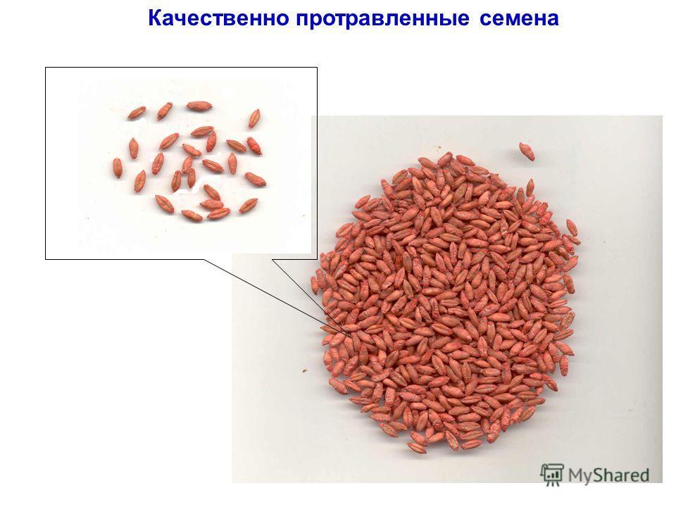 Качественно протравленные семена