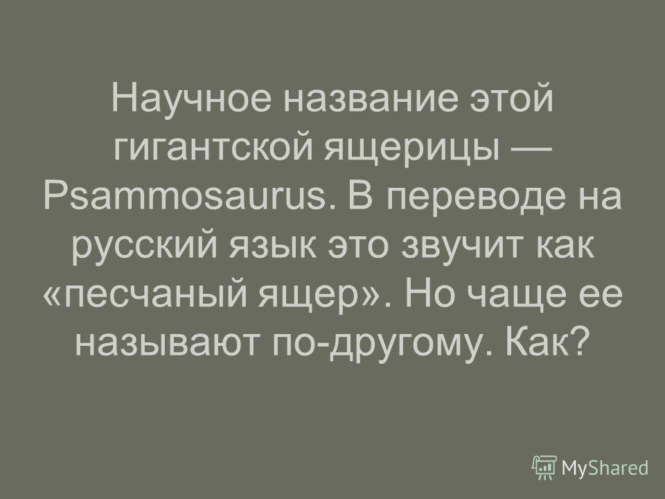 Научное название этой гигантской ящерицы Psammosaurus. В переводе на русский язык это звучит как «песчаный ящер». Но чаще ее называют по-другому. Как?