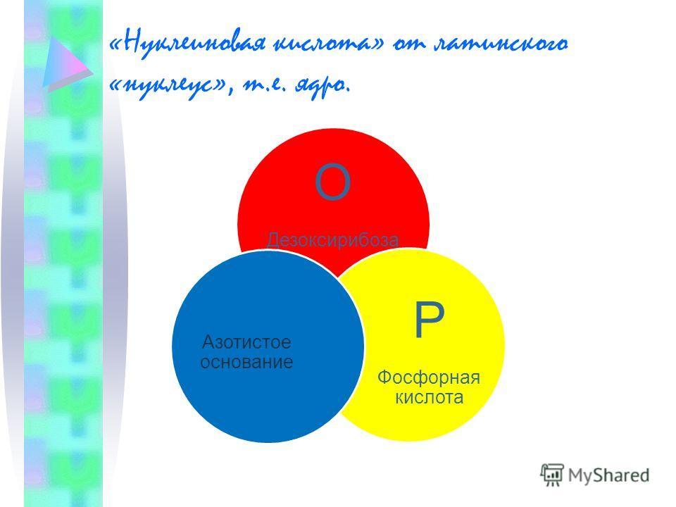 «Нуклеиновая кислота» от латинского «нуклеус», т.е. ядро. О Дезоксирибоза Р Фосфорная кислота Азотистое основание