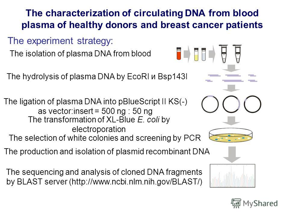 The characterization of circulating DNA from blood plasma of healthy donors and breast cancer patients The experiment strategy: The production and isolation of plasmid recombinant DNA The hydrolysis of plasma DNA by EcoRI и Bsp143I The ligation of pl