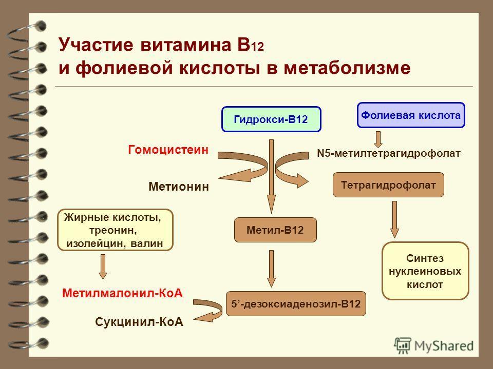 Участие витамина В 12 и фолиевой кислоты в метаболизме Гидрокси-В12 Метил-В12 5-дезоксиаденозил-В12 Фолиевая кислота Тетрагидрофолат Синтез нуклеиновых кислот Жирные кислоты, треонин, изолейцин, валин N5-метилтетрагидрофолат Гомоцистеин Метионин Мети