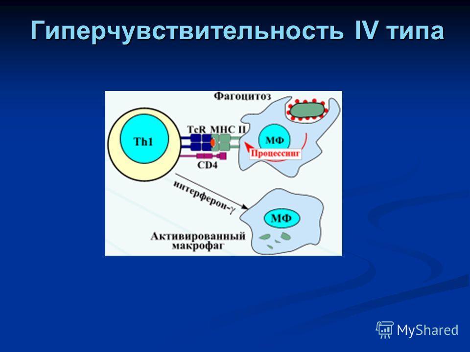 Гиперчувствительность IV типа