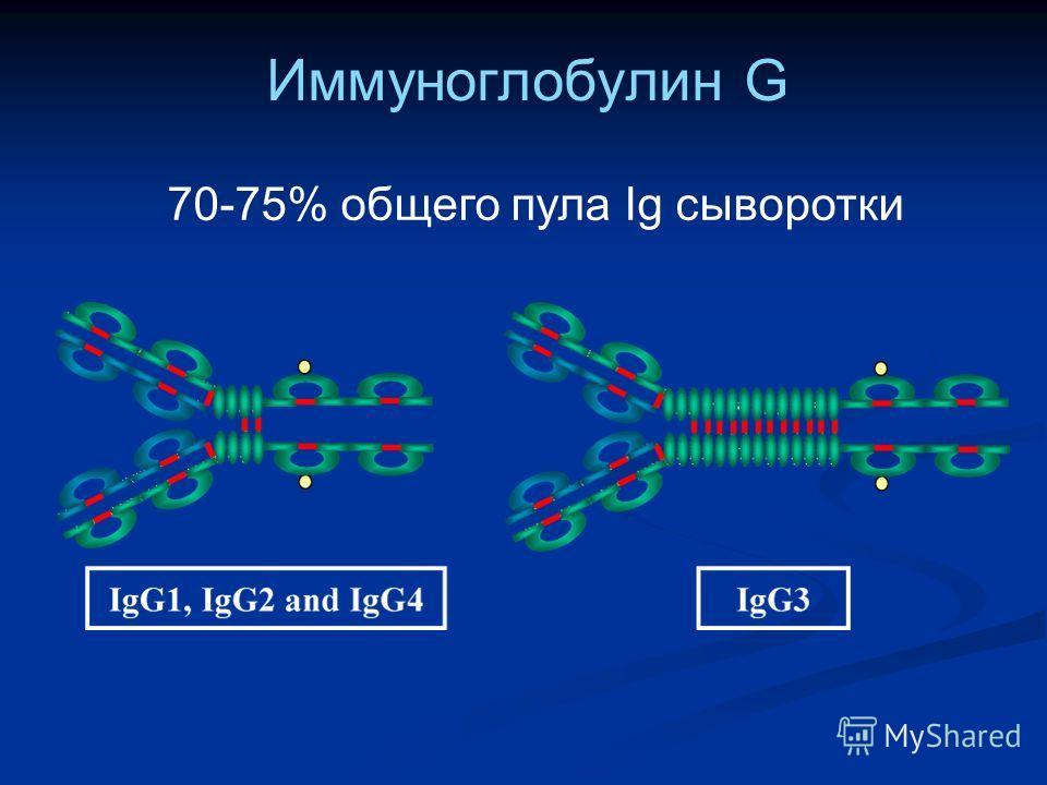 Иммуноглобулин G 70-75% общего пула Ig сыворотки