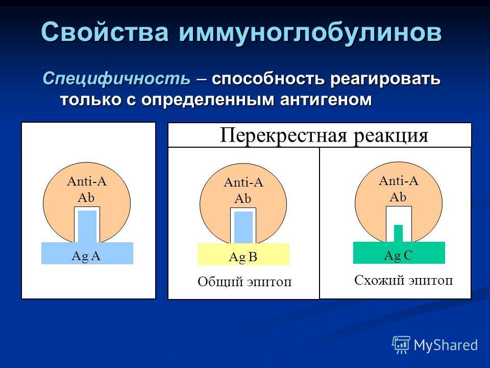Свойства иммуноглобулинов Специфичность – способность реагировать только с определенным антигеном Anti-A Ab Ag A Anti-A Ab Ag C Схожий эпитоп Перекрестная реакция Anti-A Ab Ag B Общий эпитоп