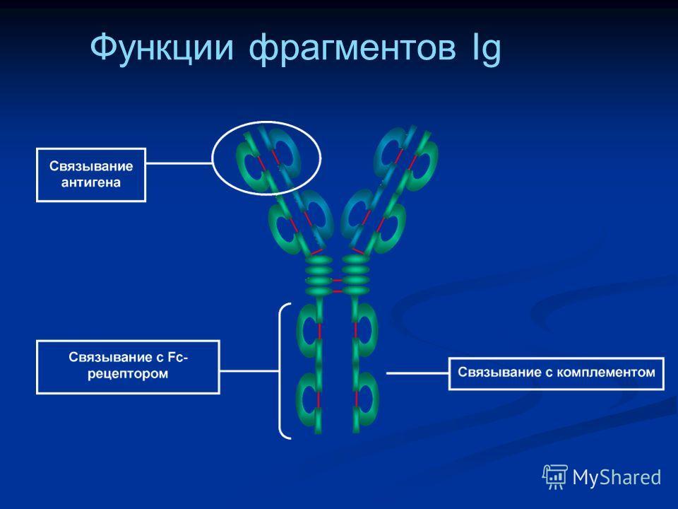 Функции фрагментов Ig