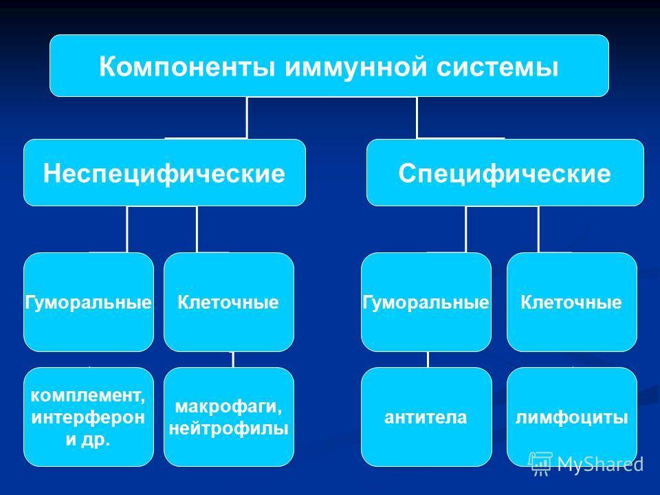 Компоненты иммунной системы НеспецифическиеСпецифические ГуморальныеКлеточные комплемент, интерферон и др. макрофаги, нейтрофилы ГуморальныеКлеточные антителалимфоциты