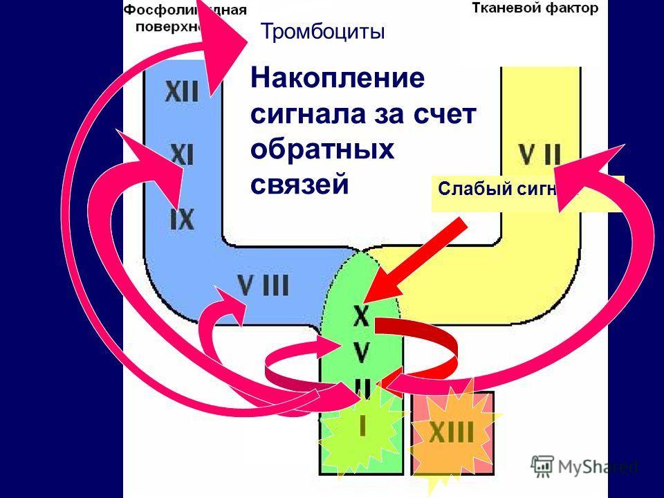 Слабый сигнал Тромбоциты Накопление сигнала за счет обратных связей