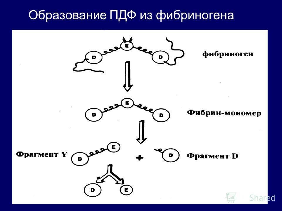 Образование ПДФ из фибриногена