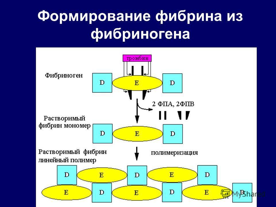 Формирование фибрина из фибриногена