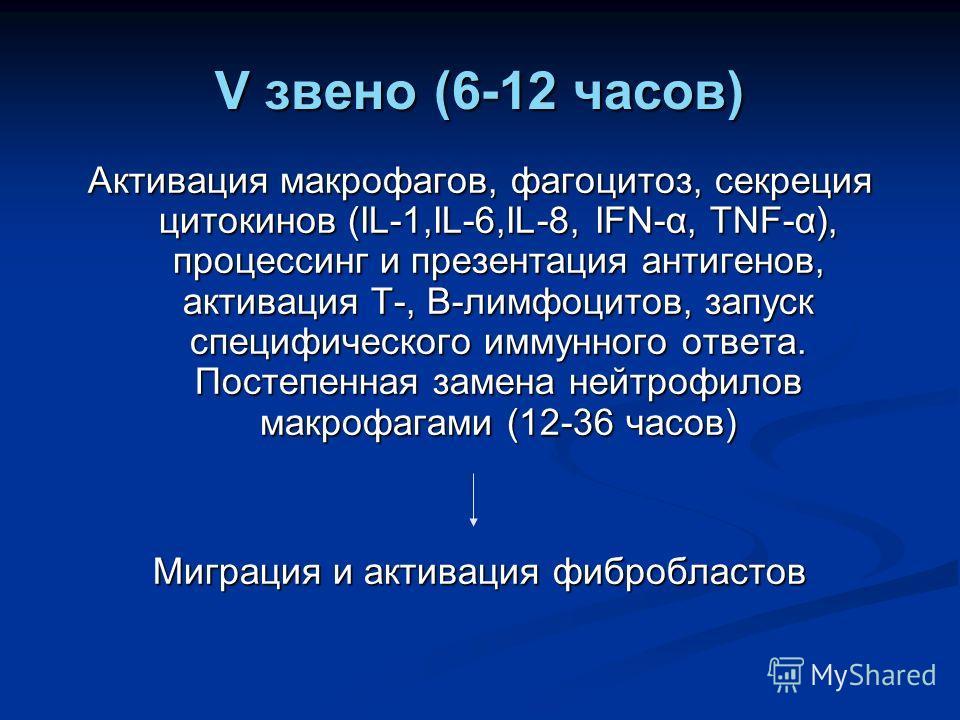 V звено (6-12 часов) Активация макрофагов, фагоцитоз, секреция цитокинов (IL-1,IL-6,IL-8, IFN-α, TNF-α), процессинг и презентация антигенов, активация Т-, В-лимфоцитов, запуск специфического иммунного ответа. Постепенная замена нейтрофилов макрофагам