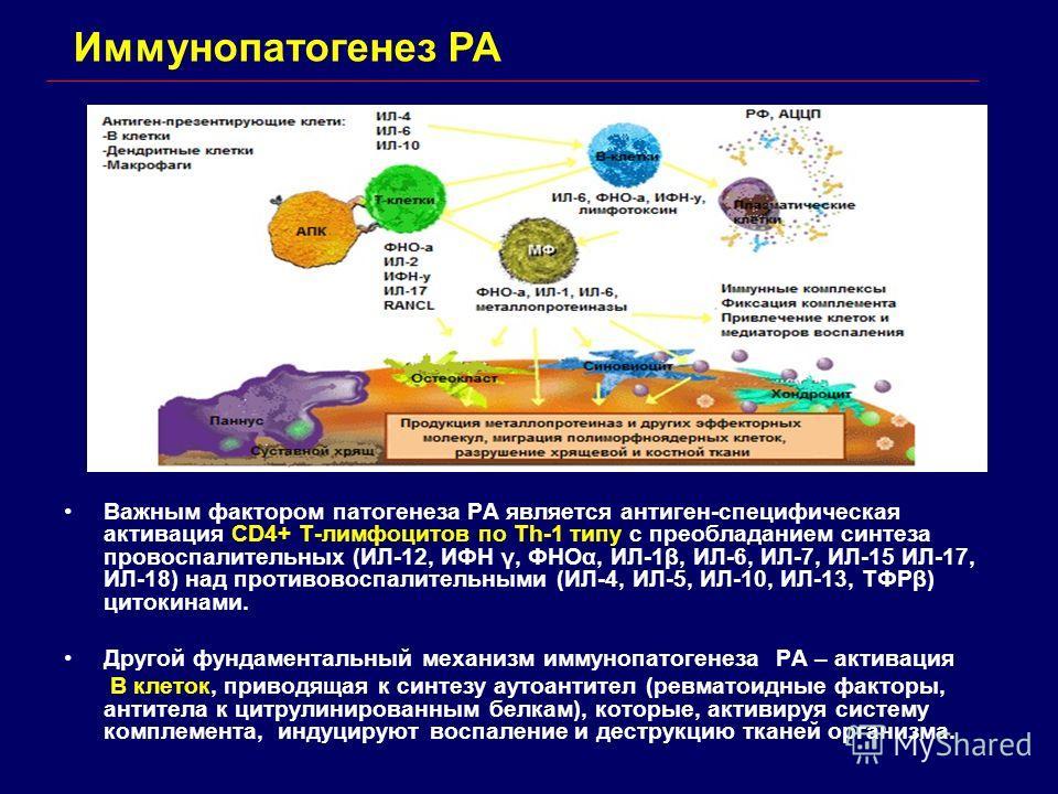 Иммунопатогенез РА Важным фактором патогенеза РА является антиген-специфическая активация CD4+ T-лимфоцитов по Th-1 типу с преобладанием синтеза провоспалительных (ИЛ-12, ИФН γ, ФНОα, ИЛ-1β, ИЛ-6, ИЛ-7, ИЛ-15 ИЛ-17, ИЛ-18) над противовоспалительными