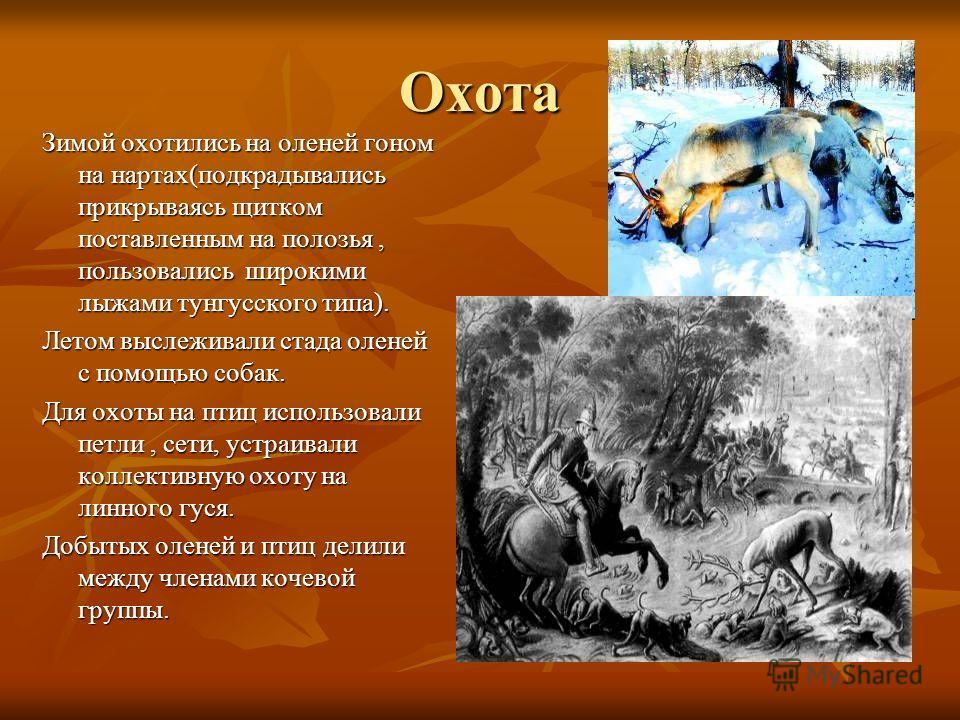 Охота Зимой охотились на оленей гоном на нартах(подкрадывались прикрываясь щитком поставленным на полозья, пользовались широкими лыжами тунгусского типа). Летом выслеживали стада оленей с помощью собак. Для охоты на птиц использовали петли, сети, уст