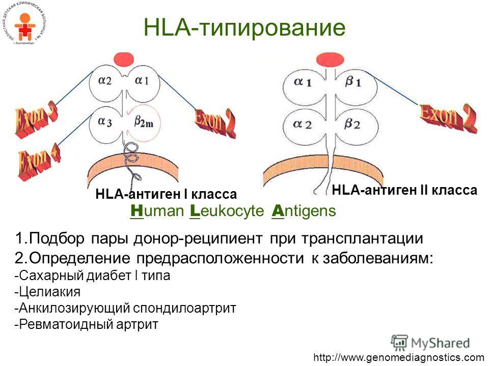 1.Подбор пары донор-реципиент при трансплантации 2.Определение предрасположенности к заболеваниям: -Сахарный диабет I типа -Целиакия -Анкилозирующий спондилоартрит -Ревматоидный артрит HLA-типирование H uman L eukocyte A ntigens http://www.genomediag
