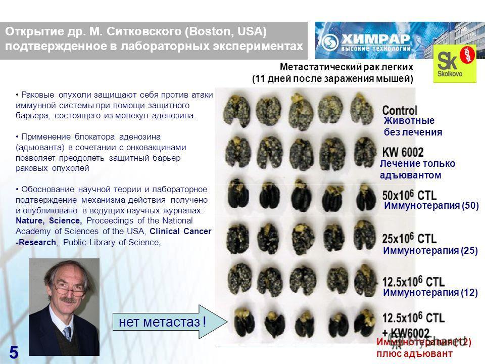 5 Метастатический рак легких (11 дней после заражения мышей) Животные без лечения Лечение только адъювантом Иммунотерапия (50) Иммунотерапия (25) Иммунотерапия (12) Иммунотерапия (12) плюс адъювант нет метастаз ! Открытие др. М. Ситковского (Boston,