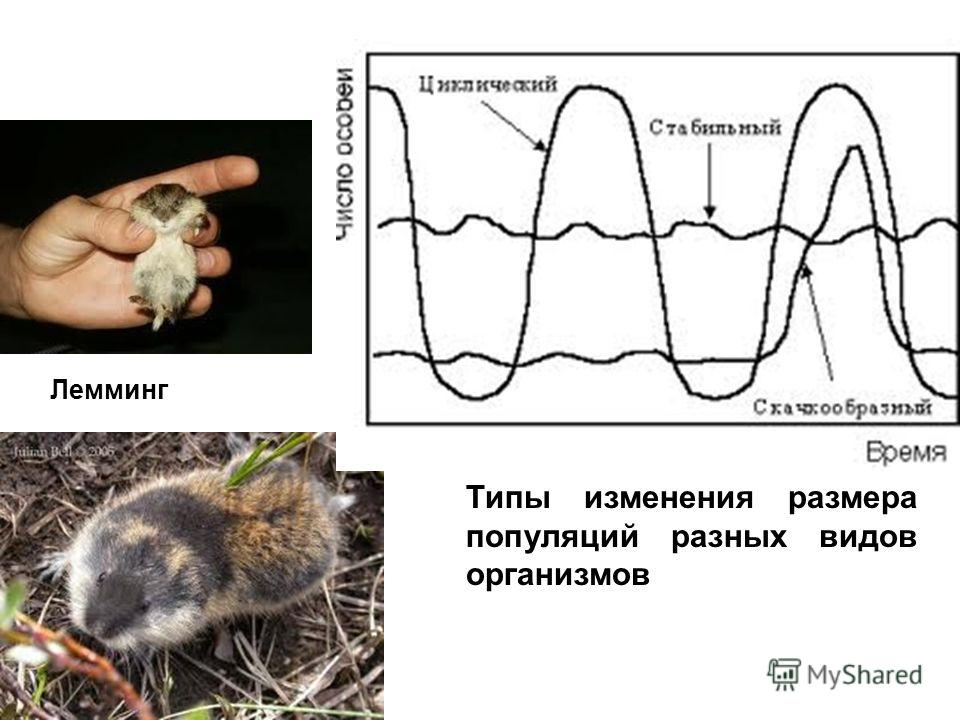 Типы изменения размера популяций разных видов организмов Лемминг