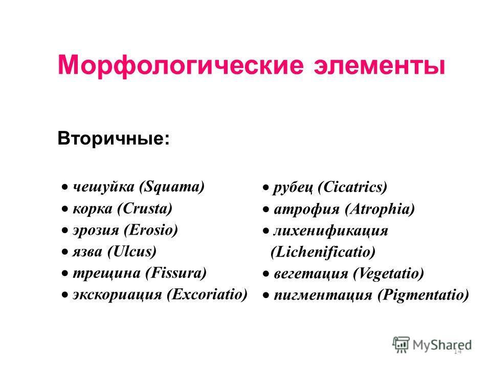 14 Морфологические элементы Вторичные: чешуйка (Squama) корка (Crusta) эрозия (Erosio) язва (Ulcus) трещина (Fissura) экскориация (Excoriatio) рубец (Cicatrics) атрофия (Atrophia) лихенификация (Lichenificatio) вегетация (Vegetatio) пигментация (Pigm