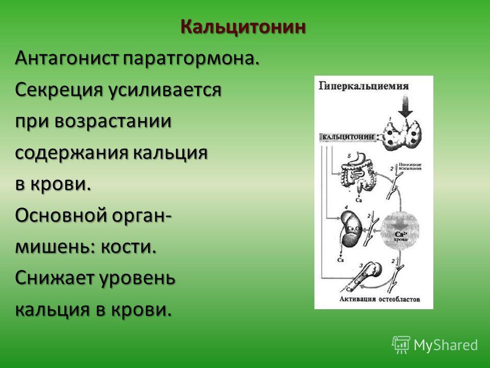 Кальцитонин Антагонист паратгормона. Секреция усиливается при возрастании содержания кальция в крови. Основной орган- мишень: кости. Снижает уровень кальция в крови.
