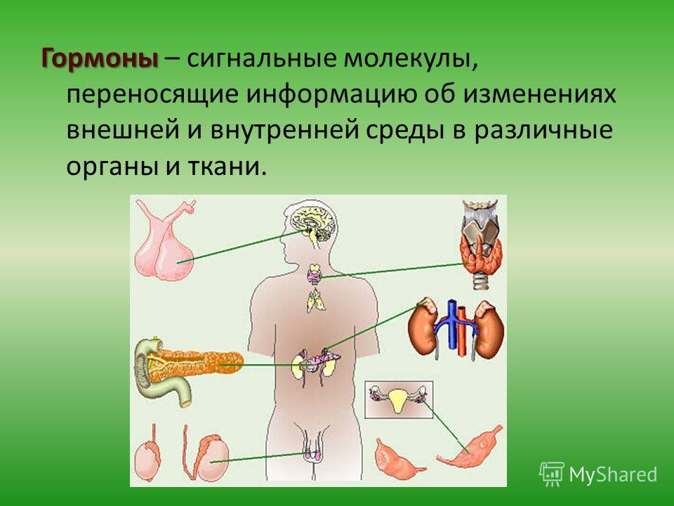 Гормоны Гормоны – сигнальные молекулы, переносящие информацию об изменениях внешней и внутренней среды в различные органы и ткани.