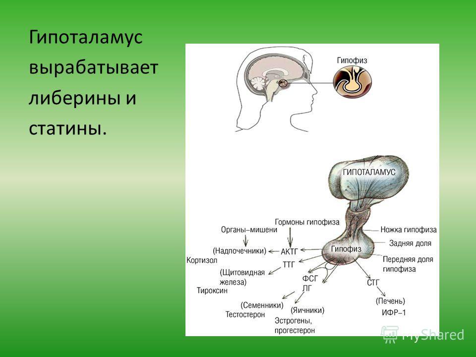 либерины статины гормоны гипофиза